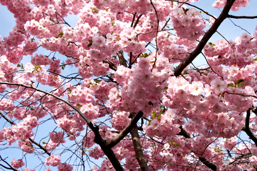 blom2013_2
