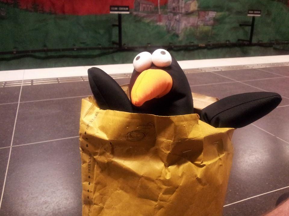 pingvin dating
